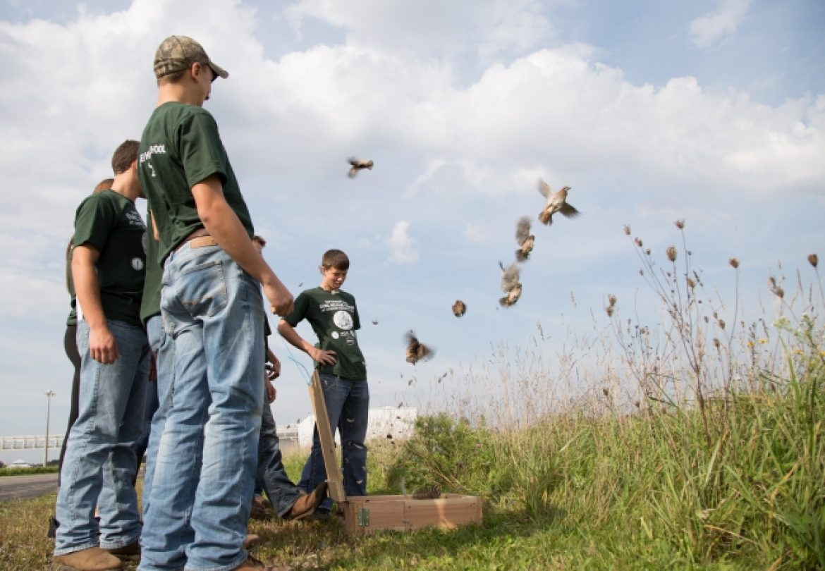 Dundee High School Partners with FCA's Dundee Engine Plant to Release Bobwhite Quail